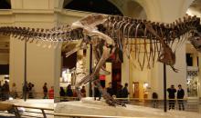 O T-Rex anda à solta!