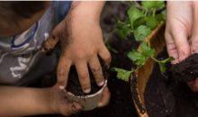 Cuidadores de sementes